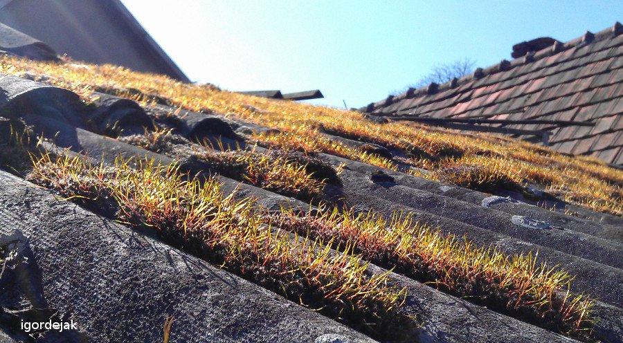 мох на даху
