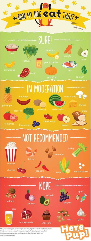 Чим можна годувати собаку (інфографіка)